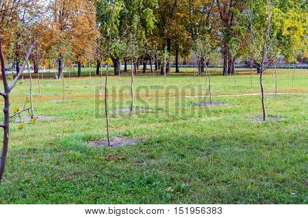 view on the autumn park. In the foreground planted with young trees (seedlings).