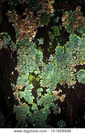 Dark tree bark with green moss dry
