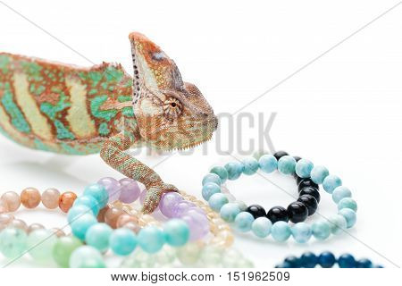Beautiful chameleon holding natural stone bracelets over white background. Copy space.