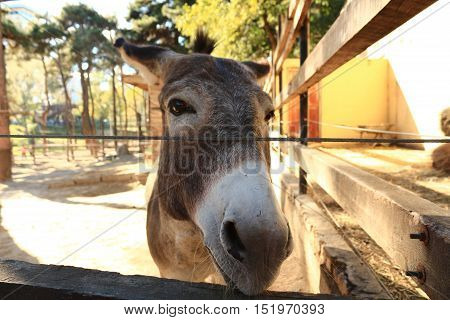 An Image Of A Cute Donkey  At The Zoo Looking