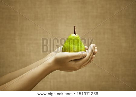 Pear fruit in female hands on burlap background. Cultivation selection stands out from the crowd concept. Sepia and color series.