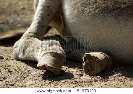 a grey Donkey lying on the ground