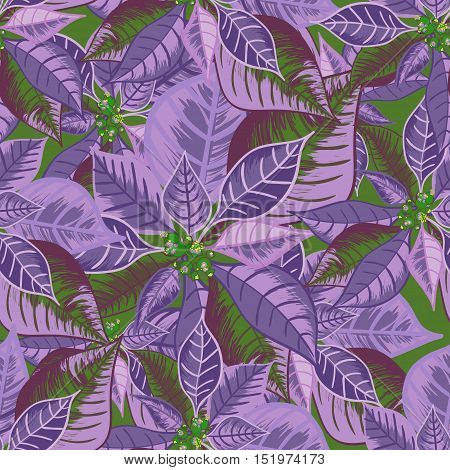 Seamless pattern with poinsettia. Christmas flower bouquet ornament in violet color. Vector illustration