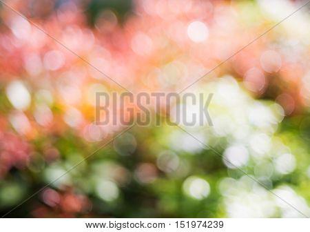 vintage nature flower bokeh background, Flower bokeh and spring bokeh