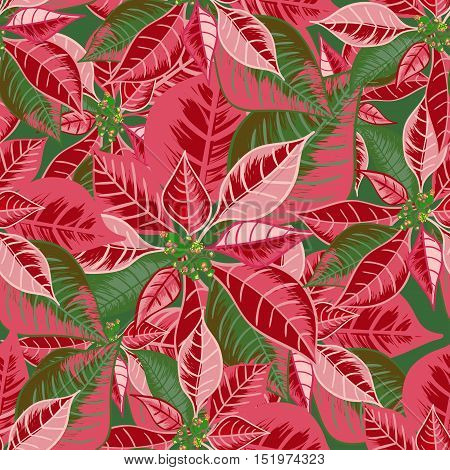 Seamless pattern with poinsettia. Christmas flower bouquet ornament in pink red color. Vector illustration