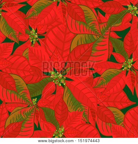 Seamless pattern with poinsettia. Christmas flower bouquet ornament in red color. Vector illustration