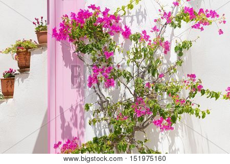 Beautiful pink ivy flower against a pink door and pots at Paros island in Greece.