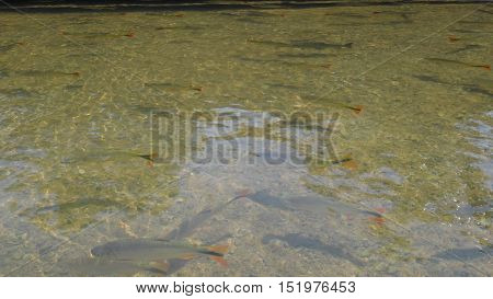 River of crystal clear water with colorful fish