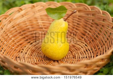 One Fresh Ripe Yellow Pear With Leaf In Wicker Basket On Outdoor Close-up. Fresh Ripe Yellow Pear. Selective Focus.