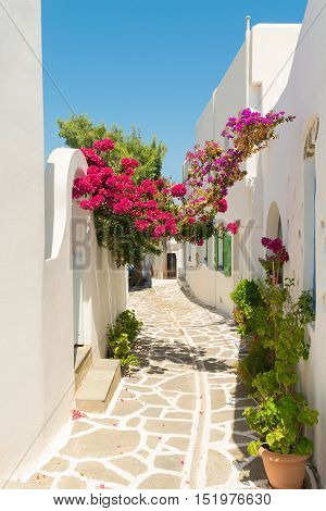 Beautiful alley with pink flowers at Prodromos local village of Paros island in Greece.
