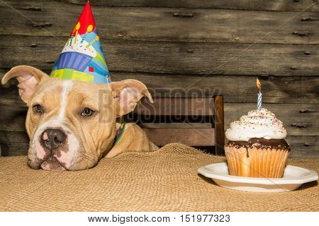 An adorable puppy at his birthday party.