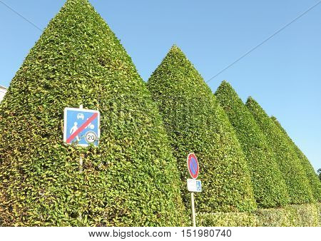High hedge of an interesting shape of cones
