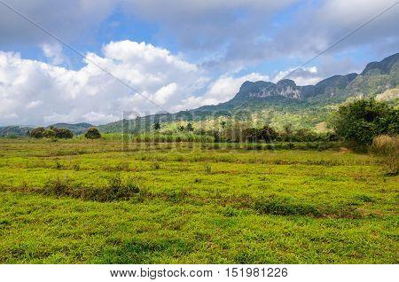 Green Field In Vinales Valley, Cuba