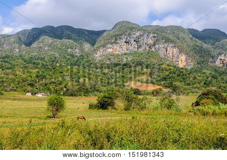 The Countryside In Vinales Valley, Cuba