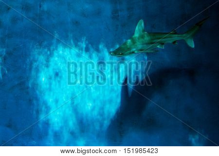 Grey Shark Jaws Ready To Attack Underwater Close Up Portrait