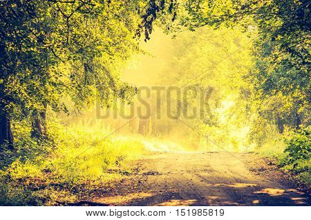 Vintage Photo Of Beautiful Trees Alley Illuminated By Morning Light