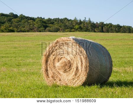 Harvesting of hay - hay bale on the summer meadow
