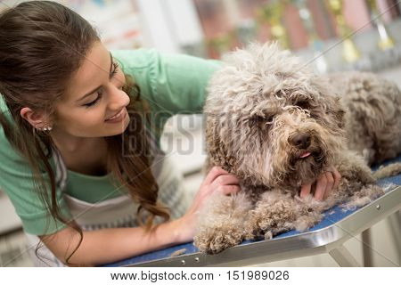 woman and grooming dog in hair service
