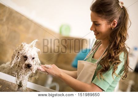 Professional dog showering in bath