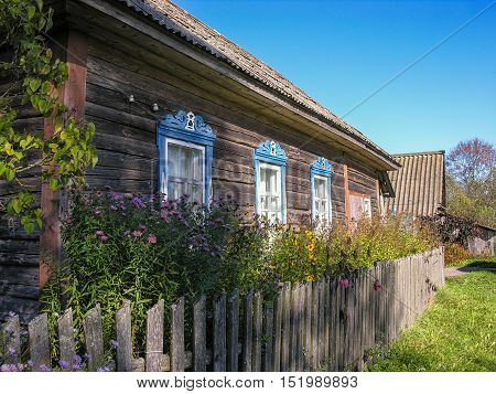 Fade flowers in the garden under the window with blue trim or an old country house
