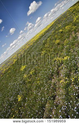 Prairie Flowers Canada