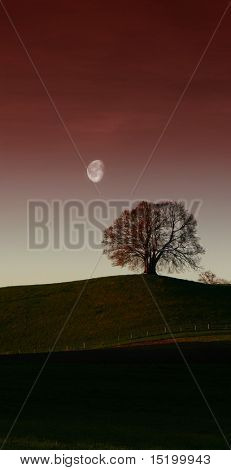 lonely tree and the pale moon