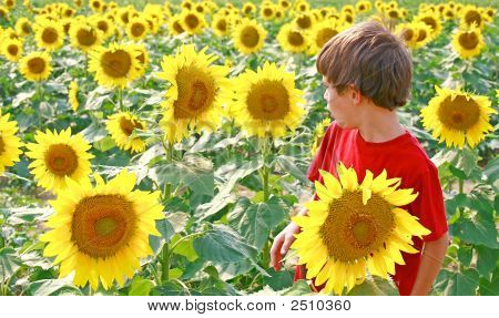 Boy And Flower Talking