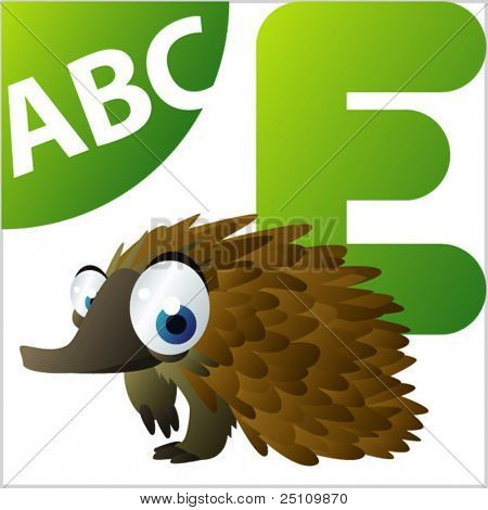 ABC animals: E is for Echidna