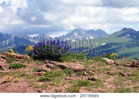 Colorado Wildblumen
