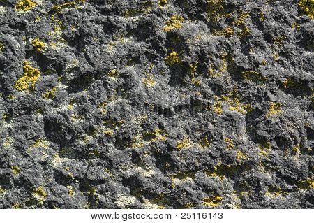 Lichen On Rough Stone