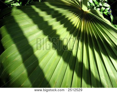 Fanned Out Leaf