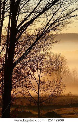 Trees Hills Fog Landscape