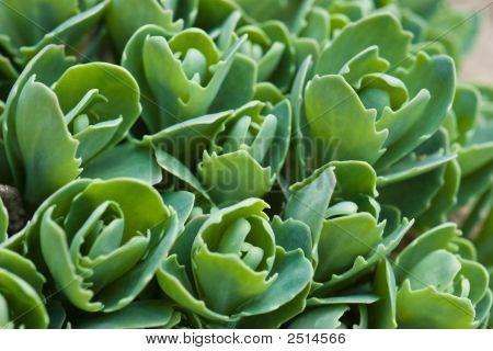 Green Brairds
