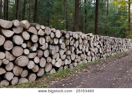 Poplar Tree Logs Stacked Lying One By One