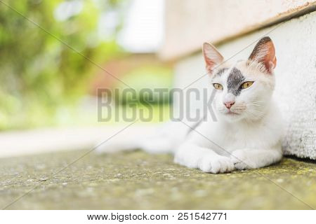 poster of Cute White Cat Lying Down On Concrete. White Cat Isolated. Cat Portrait. Cat Background
