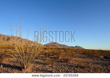 Cacto Ocotillo em deserto paisagem configuração