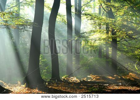 Sunbeams Pour Into An Autumn Forest