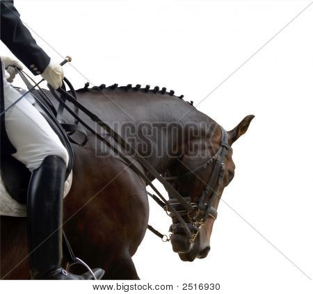 Dressage Competitor