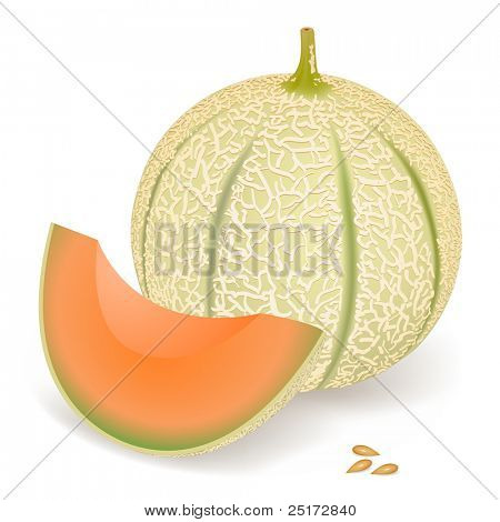 A delicious melon, vector illustration
