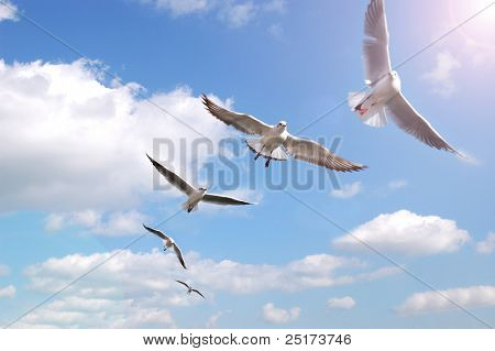 Birds on air