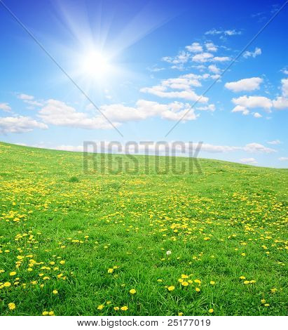 field of yellow dandelions and sun sky