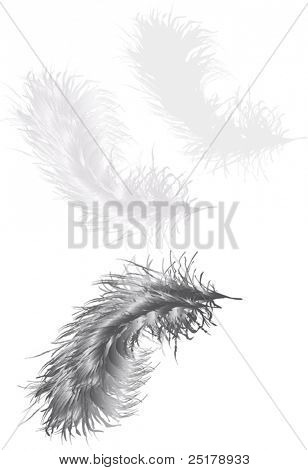 illustration with three grey feathers isolated on white background