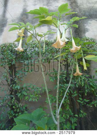 Strange Flowers In Seville Garden