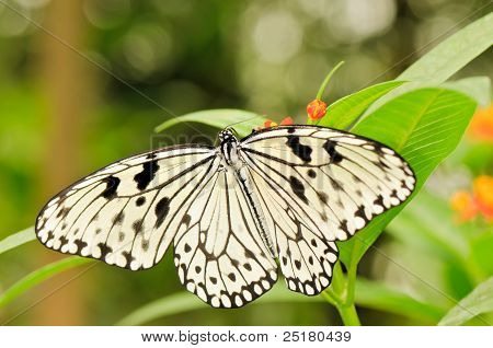 Tropical Butterfly On Plant