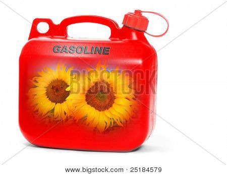 Red plastic gas can (fuel container) with sunflowers. Environmental concept. Natural gas metaphor.