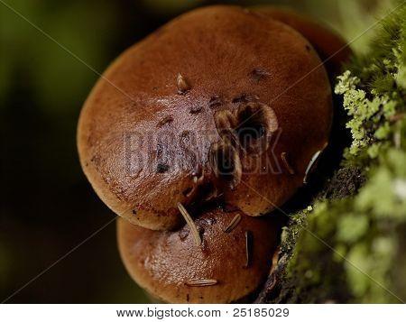 Macro of Mushrooms