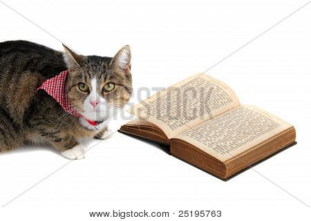 Sweet Cat With Bandana Reading A Book