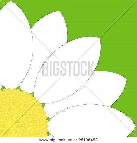 White Flower Quarter