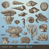 vector set: coral reef - variety of sea-design elements including different corals, shells and anima