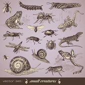 image of flea  - vector set - JPG
